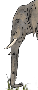 dbf_1603_elefanten-auf-der-flucht_04_1
